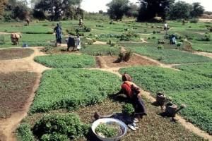 """INVESTIRE IN SENEGAL: un'opportunità di """"business"""" reale"""