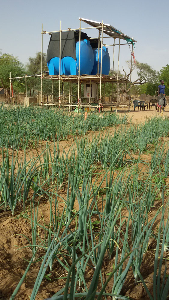 Mercato agroalimentare senegalese le iniziative