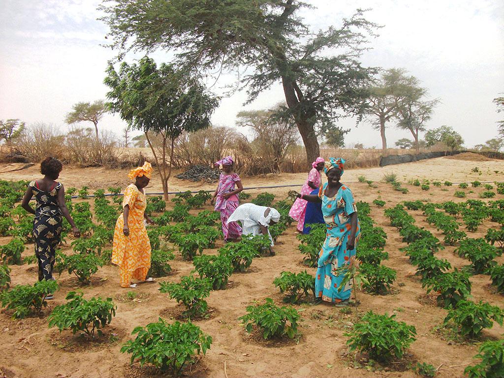 Mercato agroalimentare senegalese: le iniziative